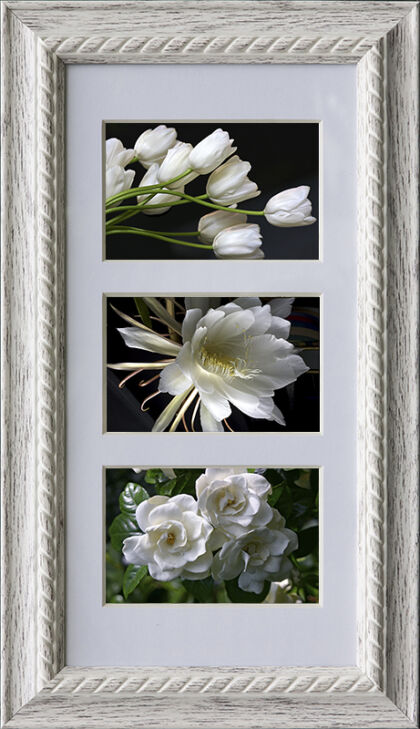 White Tulips, Queen of The Night Cactus, Pearl White Gardenia, New York