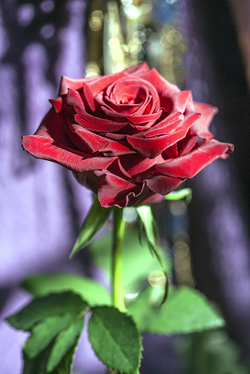 'Rose Glitter'