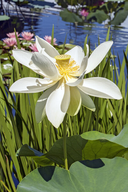 Web-IMG_9711C-2109_Wind-Laced Lotus II