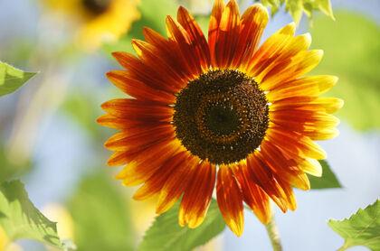 Web-DSC01995-Sunshine, Blue Skies - Springfield, New Jersey