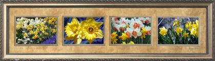 Daffodils du Jour #1