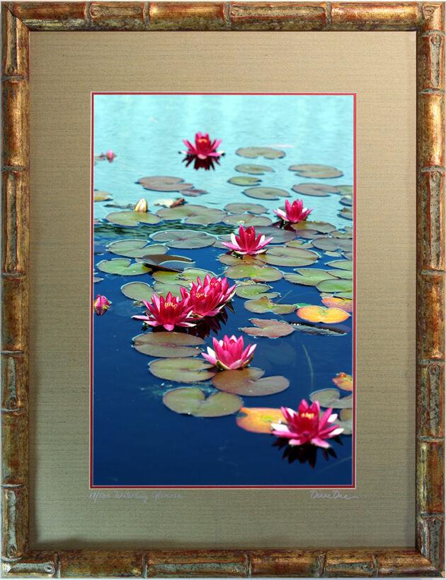 'WaterLily -Gloriosa'-The New York Botanical Garden
