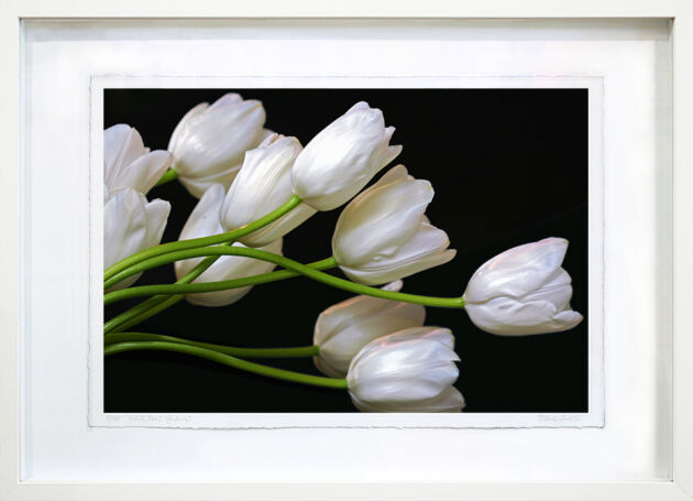 White Tulips - Rockefeller Center, New York City