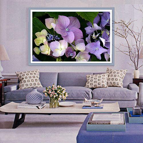 Blue Room Hydrangea-500x528