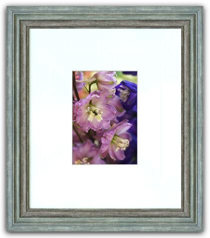 Web-Delphinium 'Maiden Astolat' - Nantucket, Massachusetts