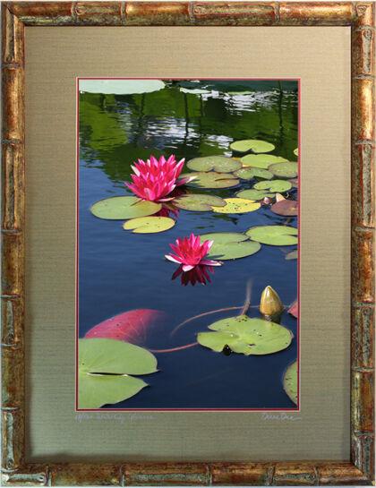 Bamboo Frame-Nymphaea 'Laydekeri Fulgens'