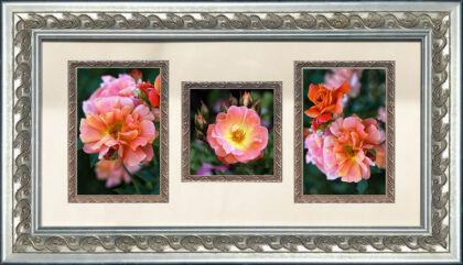 Mystic Roses