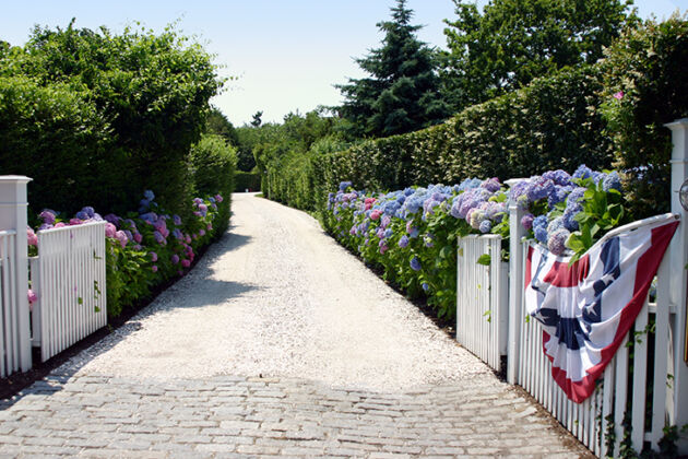 Hydrangea Carriageway_Nantucket, Massachusetts