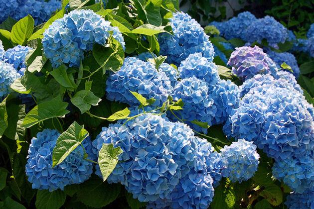 Tangled Up In Blue_Nantucket, Massachusetts