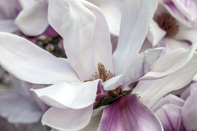 Magnolia Dawn-Springfield, New Jersey