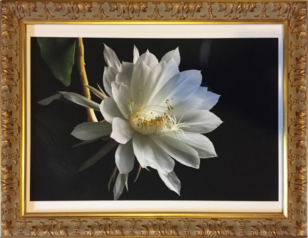'Queen of the Night, No.3' in Baroque Gold-New York City