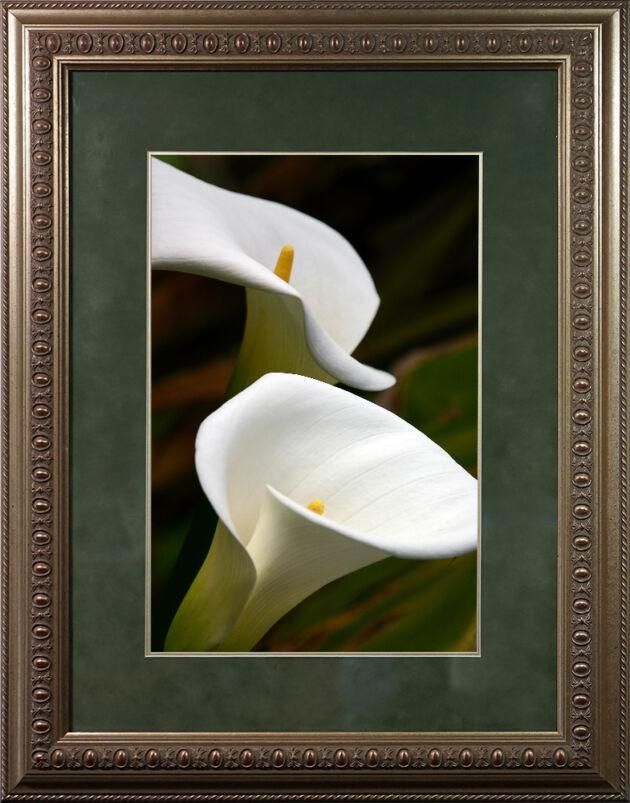DSC03019-Navajo-White-Callalilies-in-Egg-Dart-Frame