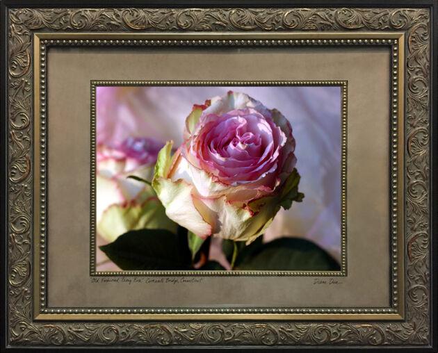 Web-IMG_8569-Old-Fashioned-Peony-Rose-Framed