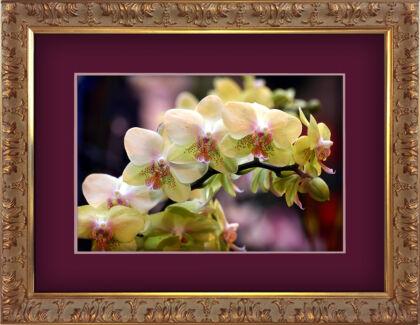 Orchid 'Fangtastic'