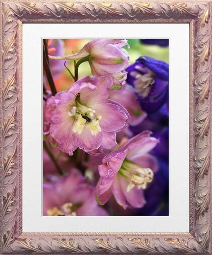 IMG_9796-Delphinium 'Maiden Astolat' in Golden Pink-Nantucket, Massachusetts