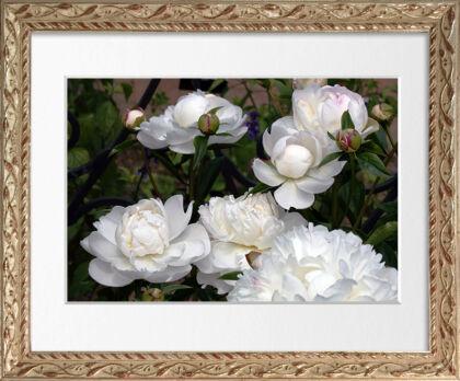 Web-IMG_9800-Classical Peony 'Gardenia'-Li'l Flower Gems Frame