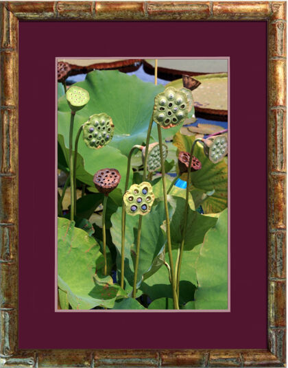 Web-'Lotus Seed Heads' in Bamboo-The New York Botanical Garden