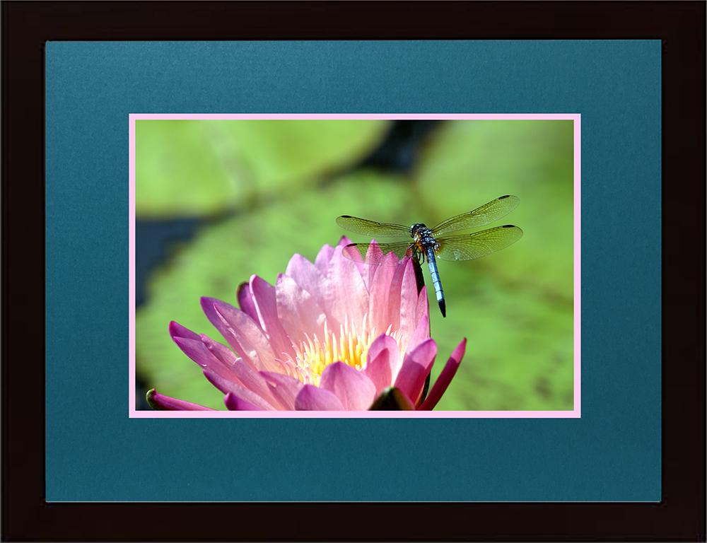 Lacy Dragonfly-Atlanta Botanical Garden
