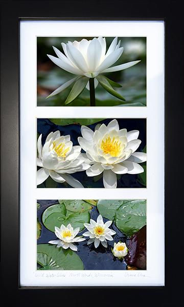 Web-Smaller-IMG_0040-Wild-Waterlilies-North-Woods-Wisconsin