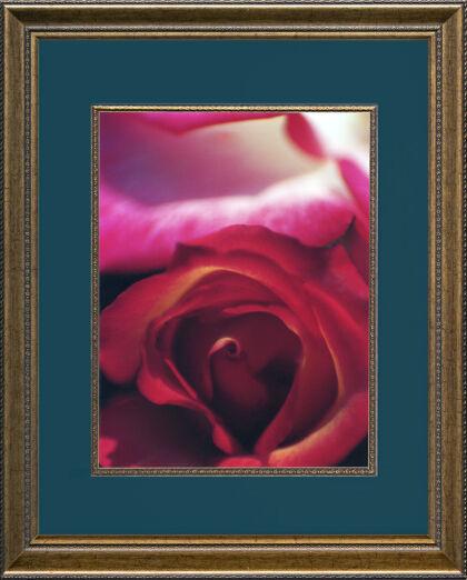 Web-Valentine Rose 2020_FRAMED!