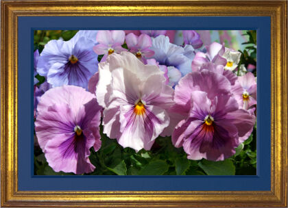 """Pansy Parade"" Spring Will Make Pansies Great Again!"